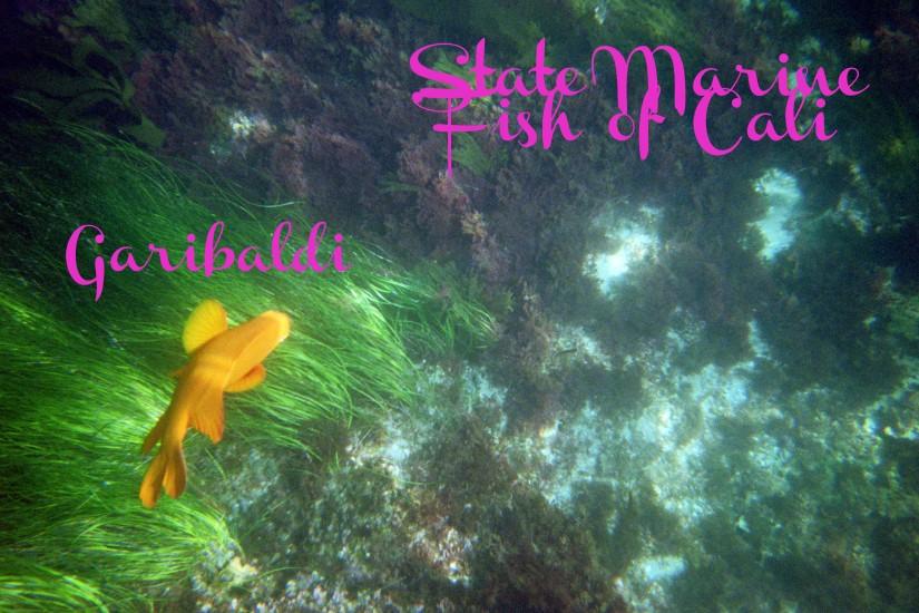 fishtext