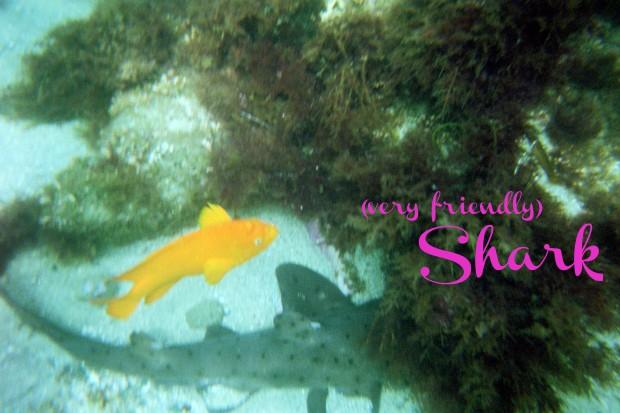 sharktext